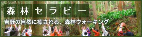 「森林セラピー」吉野の自然に癒される、森林フォーキング