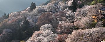 吉野山エリア