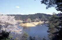tuburo_sakura.jpg